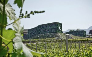 Cantina Tramin wijnmakerij - Casa del vino Amsterdam