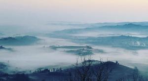 Mist in Barolo