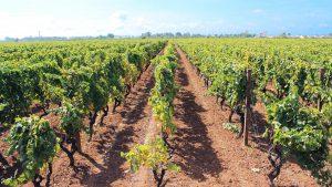 Territorio Salento Farnese Vini
