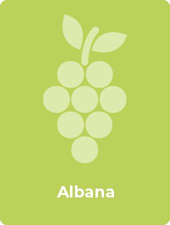 Albana druif