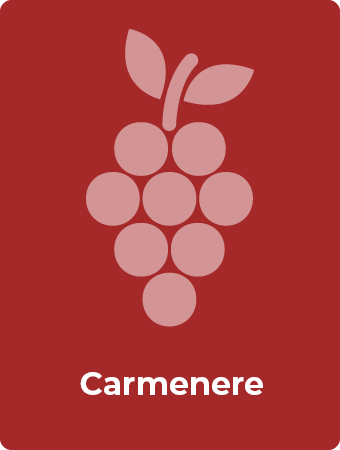 Carmenere druif