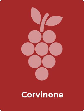 Corvinone druif