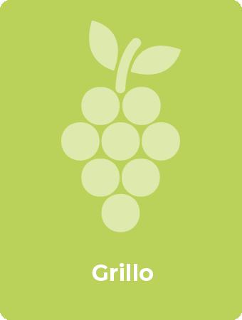 Grillo druif