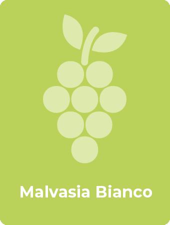 Malvasia Bianco druif