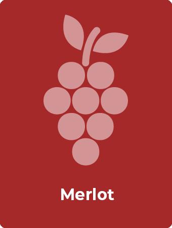 Merlot druif
