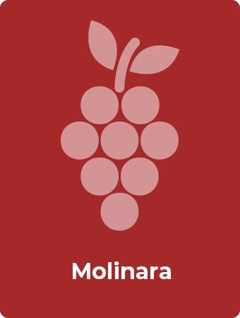 Molinara druif