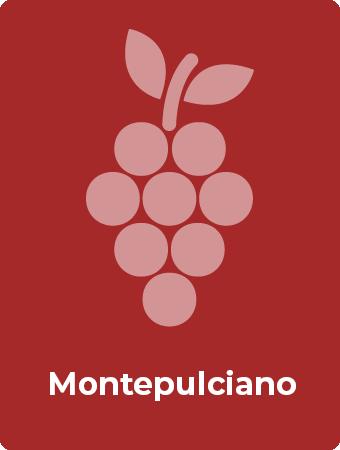 Montepulciano druif