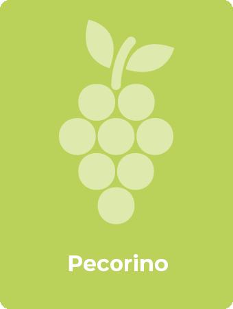 Pecorino druif