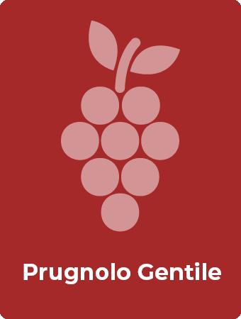 Prugnolo Gentile druif