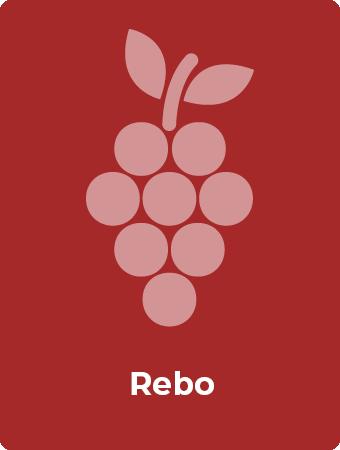 Rebo druif