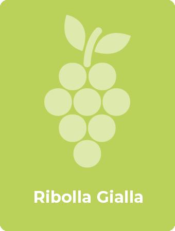 Ribolla Gialla druif