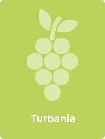 Turbania druif